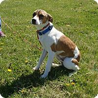 Adopt A Pet :: SHELDON - Cameron, MO