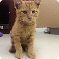 Adopt A Pet :: Kronk - Orlando, FL