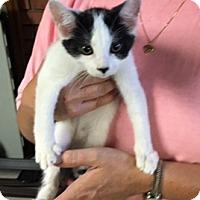 Adopt A Pet :: Stella - Troy, OH