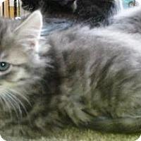 Adopt A Pet :: Angel - Half Moon Bay, CA