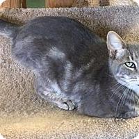 Adopt A Pet :: Gabriel - Gonzales, TX