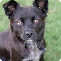 Adopt A Pet :: Lexi - Huntsville, AL