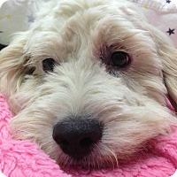 Adopt A Pet :: Alan - Oak Park, IL
