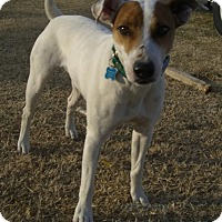 Adopt A Pet :: Pilot in Denton - Dallas/Ft. Worth, TX