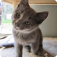 Adopt A Pet :: Angus - Covington, KY