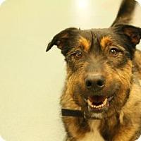 Adopt A Pet :: Gunner - Newton, KS