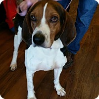 Adopt A Pet :: Gordy - Sparta, NJ