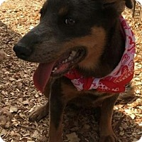 Adopt A Pet :: HAILEY - East Windsor, CT