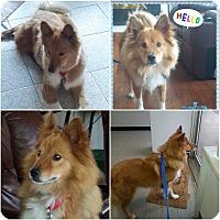 Adopt A Pet :: George - Hicksville, NY