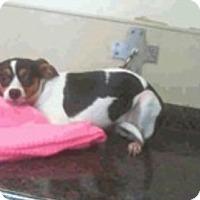 Adopt A Pet :: Oreo - Las Vegas, NV