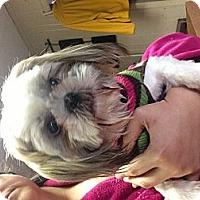 Adopt A Pet :: Maizey - Hazard, KY