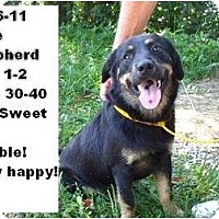 Adopt A Pet :: # 376-11 - ADOPTED! - Zanesville, OH