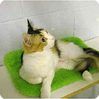 Adopt A Pet :: Scarlett - Mission, BC