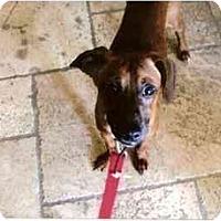 Adopt A Pet :: Murphy - Scottsdale, AZ