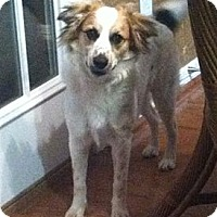 Adopt A Pet :: Toodles - Kingwood, TX
