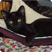 Adopt A Pet :: Tamsin - Pasadena, CA