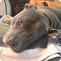 Adopt A Pet :: Solar - Reisterstown, MD