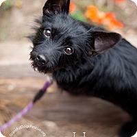 Adopt A Pet :: Holly - San Francisco, CA