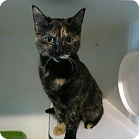 Adopt A Pet :: Tipsy - Caistor Centre, ON