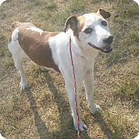 Adopt A Pet :: Rusty in Longview, Texas - Austin, TX