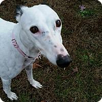 Adopt A Pet :: Wanda - Swanzey, NH