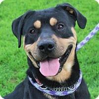 Adopt A Pet :: RUGER - Red Bluff, CA