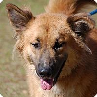 Adopt A Pet :: JoJo - Preston, CT