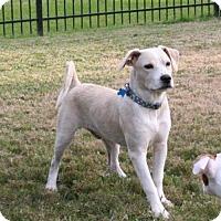 Adopt A Pet :: Alphie - Houston, TX