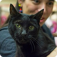Adopt A Pet :: Flannery - New York, NY