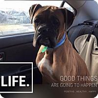 Adopt A Pet :: MicJagger - Jacksonville, AL