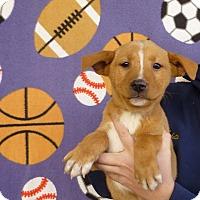 Adopt A Pet :: Newton - Oviedo, FL