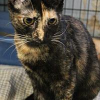 Adopt A Pet :: Destiny - Yukon, OK