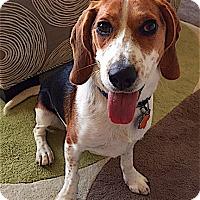 Adopt A Pet :: Rally - Houston, TX