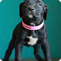 Adopt A Pet :: Hollywood - Waldorf, MD