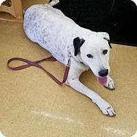 Adopt A Pet :: Tug - Tampa, FL