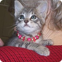 Adopt A Pet :: Windsong - Picayune, MS