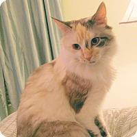 Adopt A Pet :: Allie - Royal Palm Beach, FL