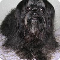 Adopt A Pet :: Havana - Yucaipa, CA