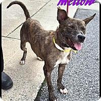 Adopt A Pet :: Mellow - Ahoskie, NC