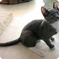 Adopt A Pet :: Bonnie - Sherman Oaks, CA