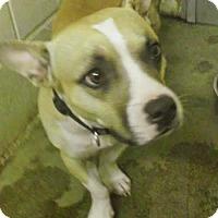 Adopt A Pet :: Batman - Willingboro, NJ