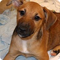 Adopt A Pet :: Perdita - Burbank, OH