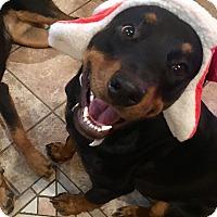 Adopt A Pet :: Recker - Gilbert, AZ