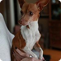 Adopt A Pet :: Romeo - Matthews, NC