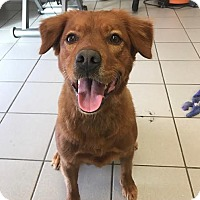 Adopt A Pet :: Ruby - Cincinnati, OH