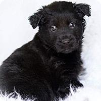 Adopt A Pet :: Koda 💙! - Allentown, PA