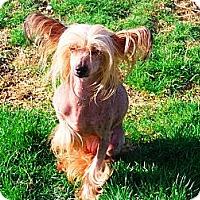 Adopt A Pet :: Lana and Brinna - Washington, PA