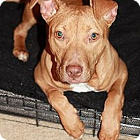 Adopt A Pet :: Ruby - Reisterstown, MD