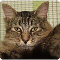 Adopt A Pet :: Oyster - El Cajon, CA