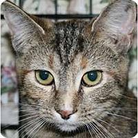 Adopt A Pet :: Tassie - Walkersville, MD